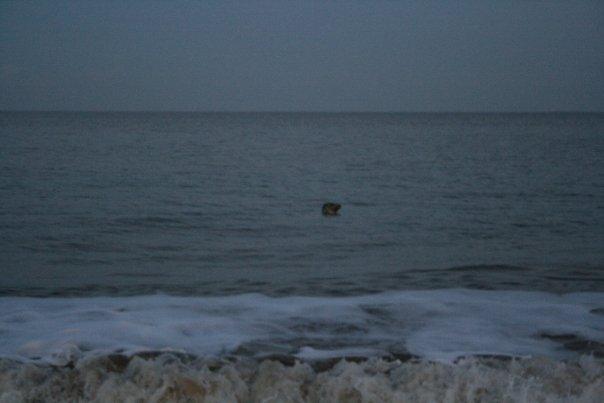Seal_pic