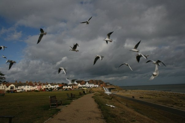 Lowestoft_gulls